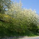 Blühender Ortsausgang Welling