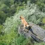 Der König der Löwen/Hunde