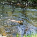 Seehund in der Nette